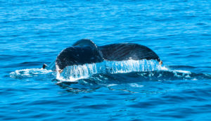 whale watching boat tours in Puerto Vallarta - Vallarta Yacht Company