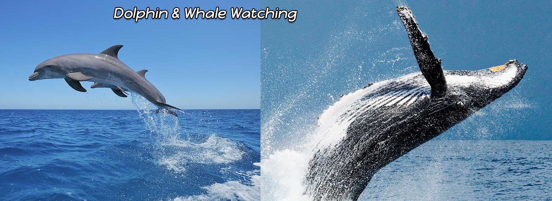 Dolphin-&-Whale-Watching